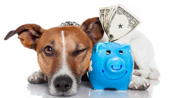 money-dog-01-1-620x330