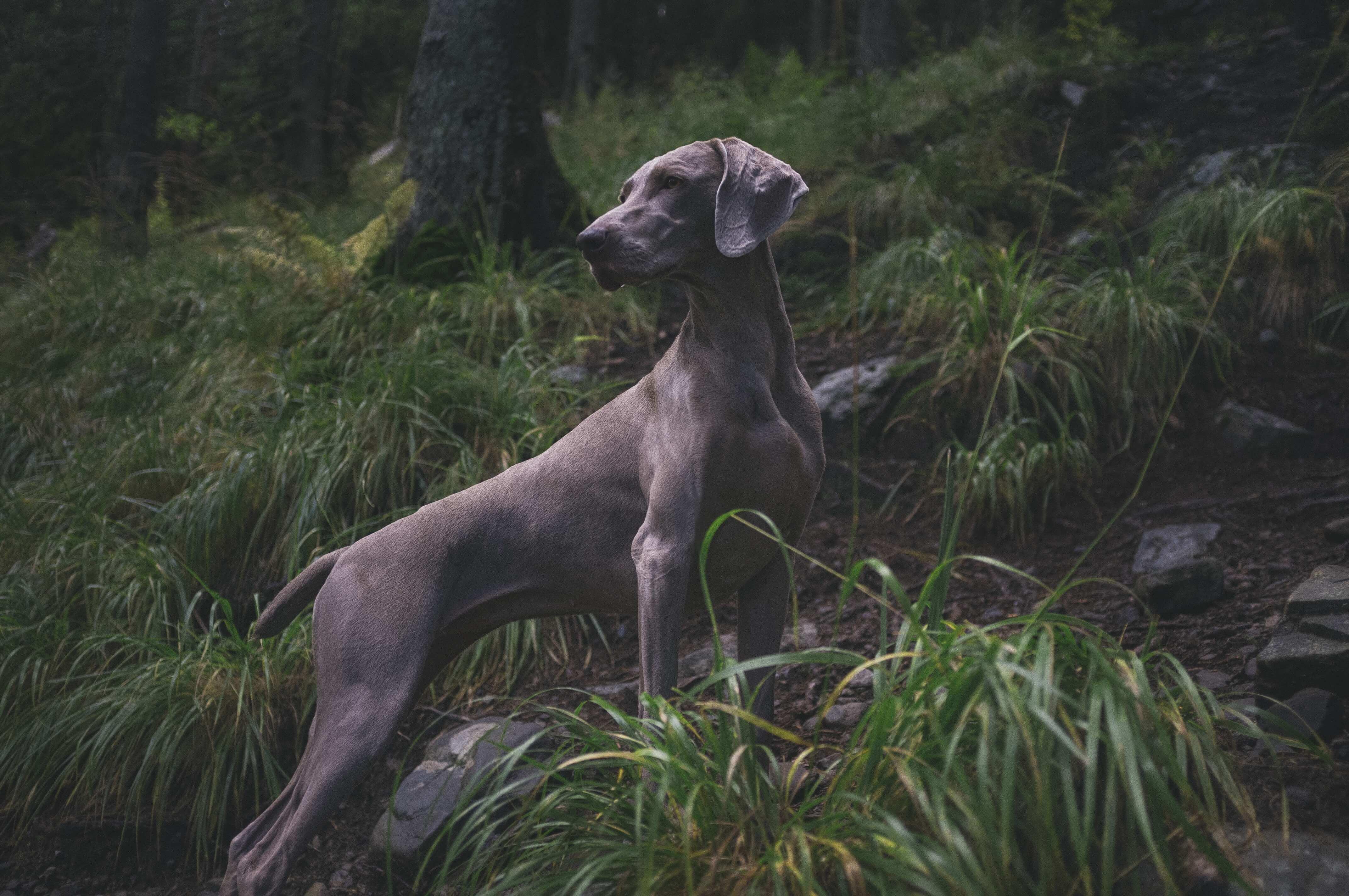 Hund Wald 1
