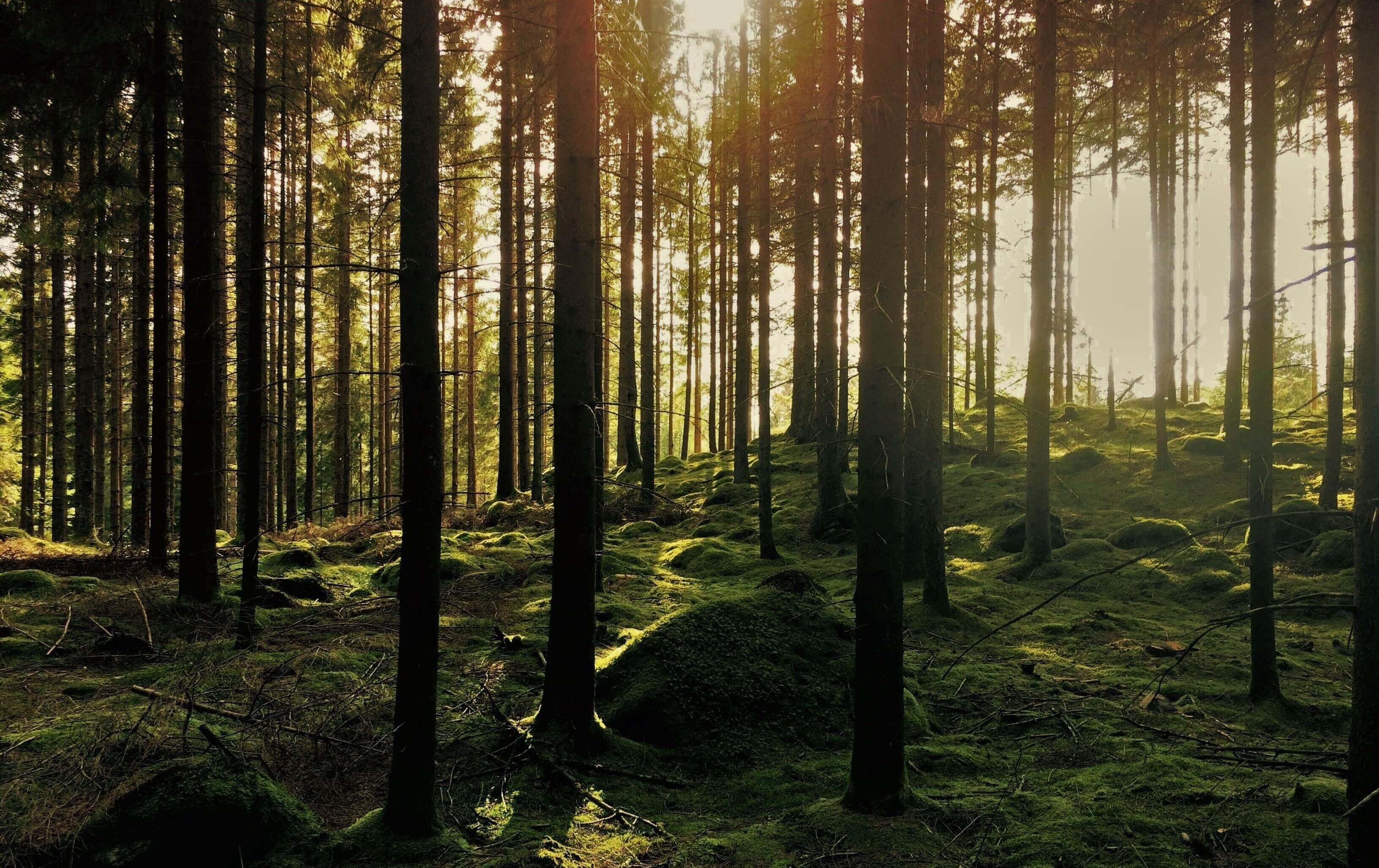 Wald 12.1